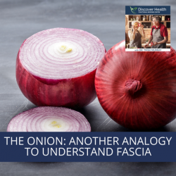 The Onion: Another Analogy to Understand Fascia